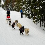 007-Resized_DSC_8142-Darby-Dogsled-Races