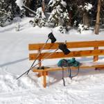 014-Ski-Bench-15jan101